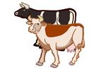 Bild 2 Kühe