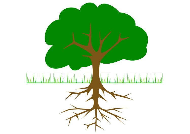 Bild Baum mit Wurzeln  Abb 20764