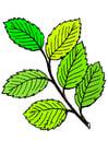 Bild Blätter im Sommer