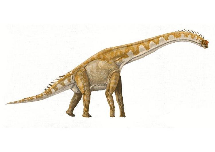 bild brachiosaurus  kostenlose bilder zum ausdrucken