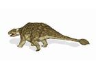 Bild Dinosaurier - Ankylosaurus 2