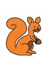 Bild Eichhörnchen