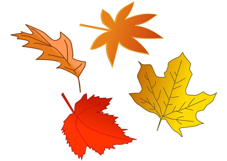 Bild Herbstblätter - Abb. 20537