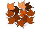 Bild Herbstblätter