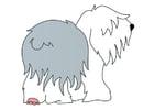 Bild Hund - Bobtail