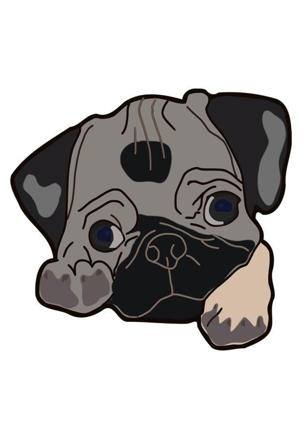 bild hund  mops  kostenlose bilder zum ausdrucken