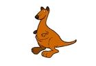 Bild Känguruh