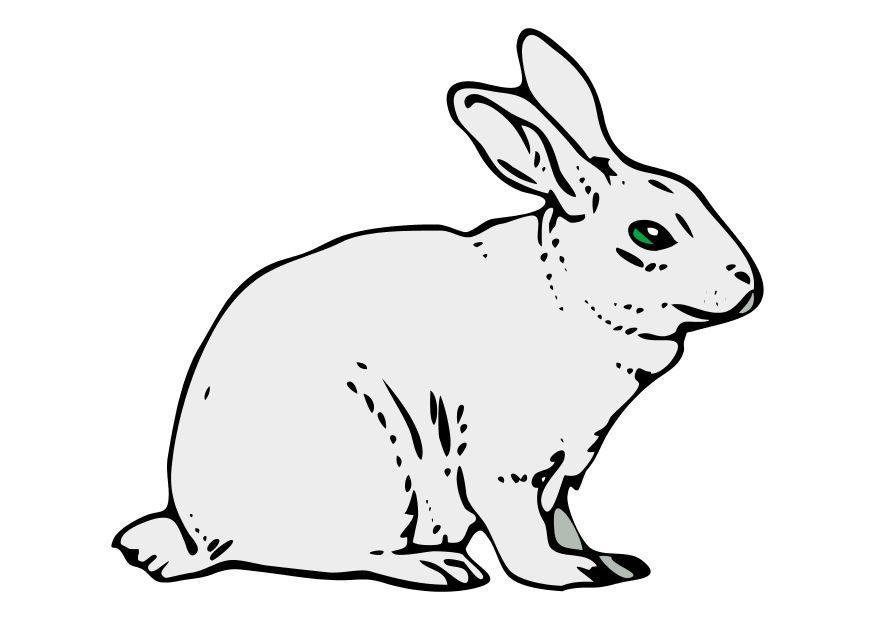 Bild Kaninchen Kostenlose Bilder Zum Ausdrucken