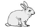 Bild Kaninchen