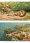 Bild Meeresleben