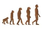 Bild menschliche Evolution