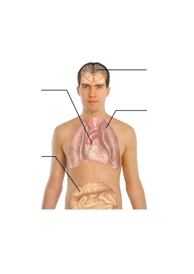 Bild menschlicher Körper - Abb. 27951