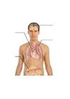 Bild menschlicher Körper