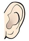 Bild Ohr - Stille