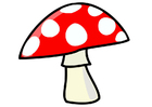 Bild Pilz