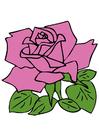 Bild Rose