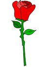Bild rote Rose