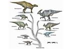 Bild Saurier Evolution