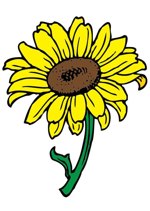 bild sonnenblume  kostenlose bilder zum ausdrucken
