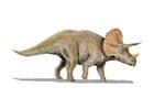 Bild Triceratops
