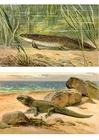 Bild Vom Meeres-  zu Landtiere
