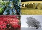 Foto 4 Jahreszeiten