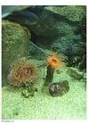 Foto anemone