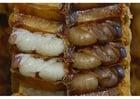 Foto Bienenlarven