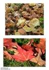 Foto Blätter