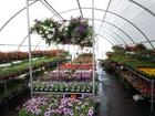Foto Blumen und Pflanzen