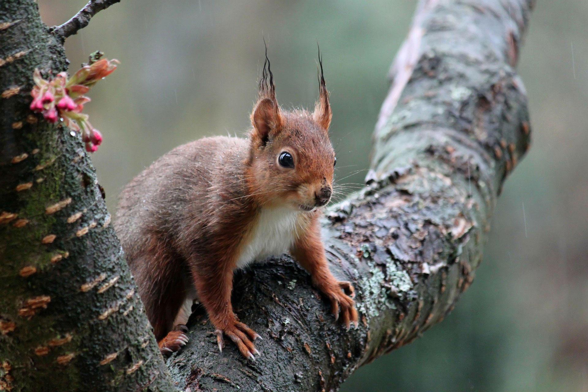 foto eichhörnchen  kostenlose fotos zum ausdrucken  bild