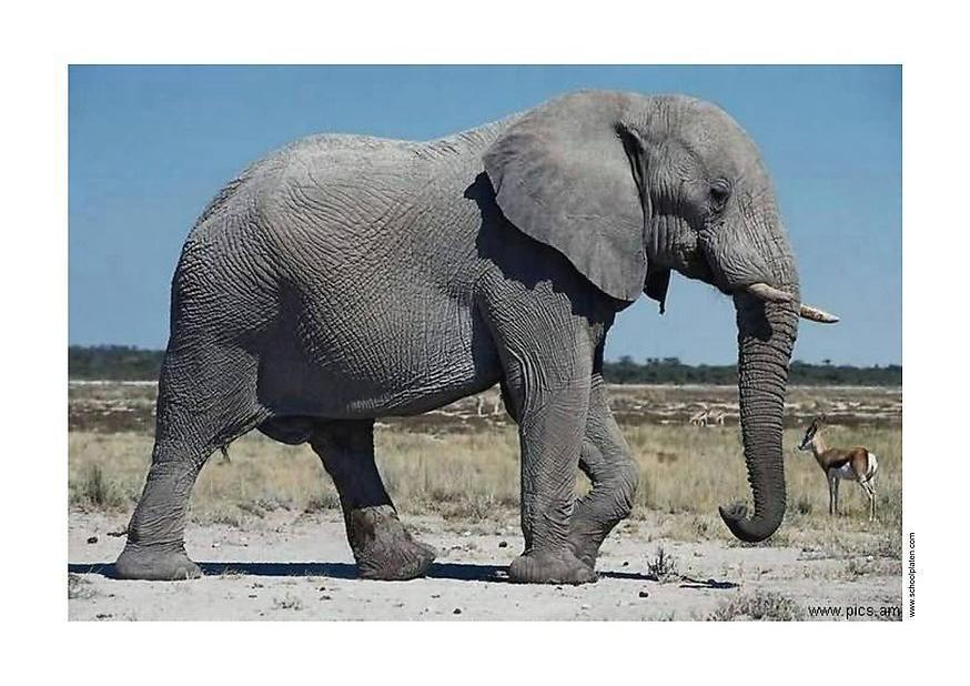 foto elefant abb 2914