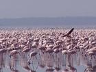 Foto Flamingos
