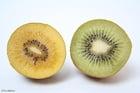 Foto grüne und gelbe Kiwi