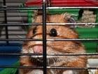 Foto Hamster in Käfig