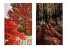 Foto Herbst 1