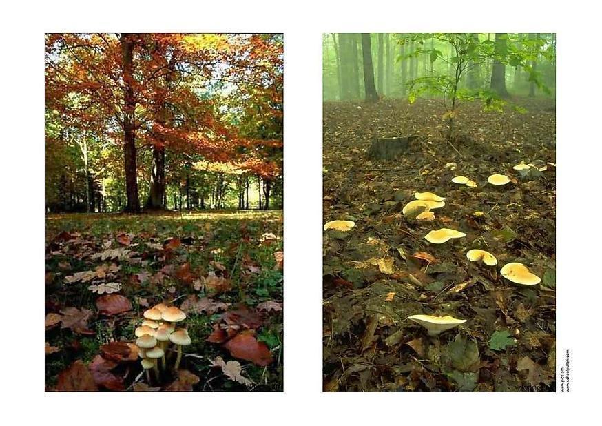 Foto Herbst 2  Abb 2905