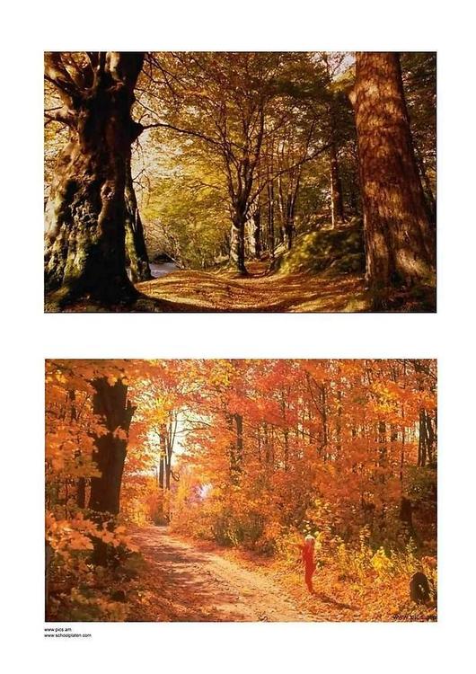 Foto Herbst 3  Abb 2899