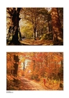 Foto Herbst 3
