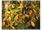 Foto Herbst im Wald