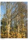 Foto Herbstbäume
