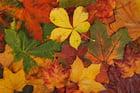 Foto Herbstblätter