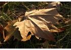Foto Herbstblatt