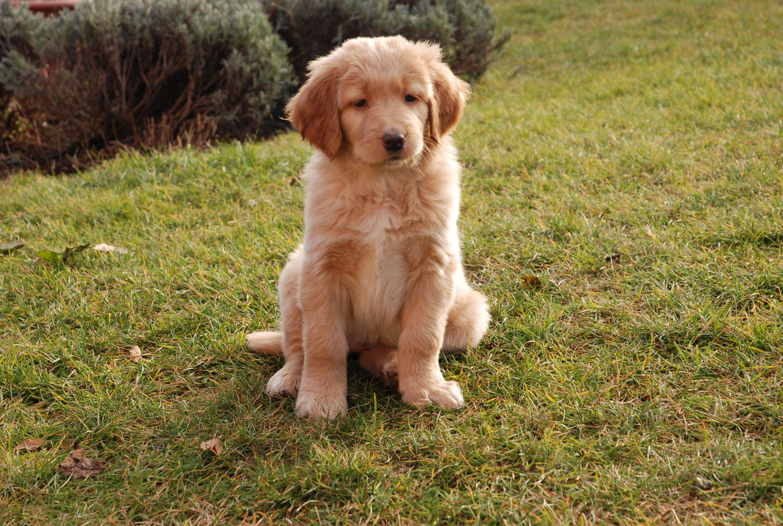 Foto Hund Junger Hund Abb