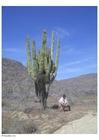 Foto Kaktus in der Wüste
