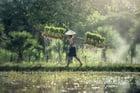 Foto Landwirtschaft