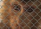 Foto Leiden von Tieren