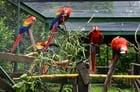 Foto Papageien im Käfig