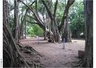Foto Park Puna