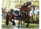 Foto Pferdekarussel